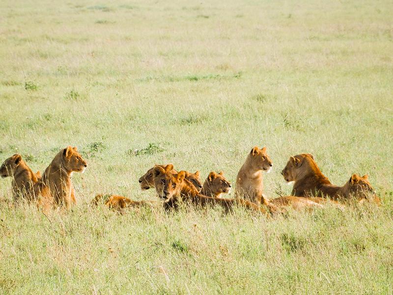Safari Serengeti Nationalpark