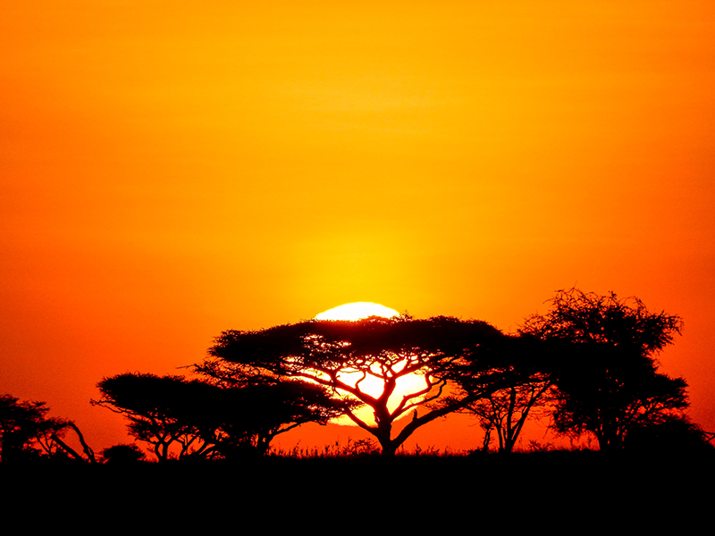 Serengeti Sonnenaufgang