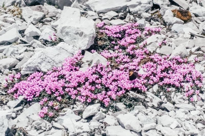 Vegetation im Rätikon