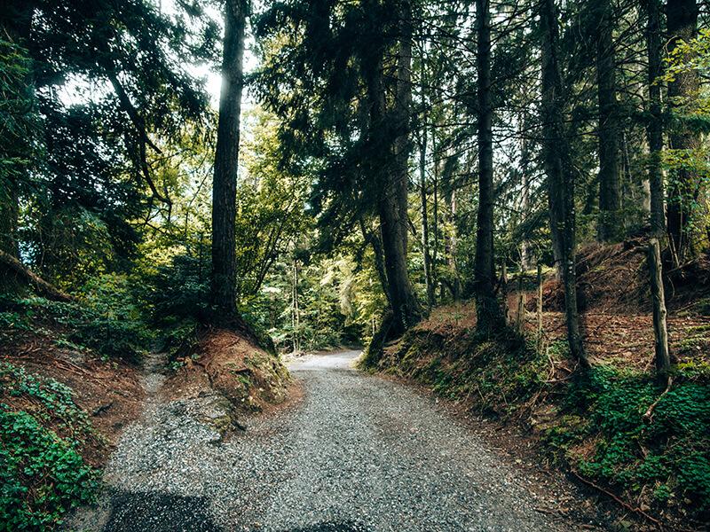 Wanderung durch Wald