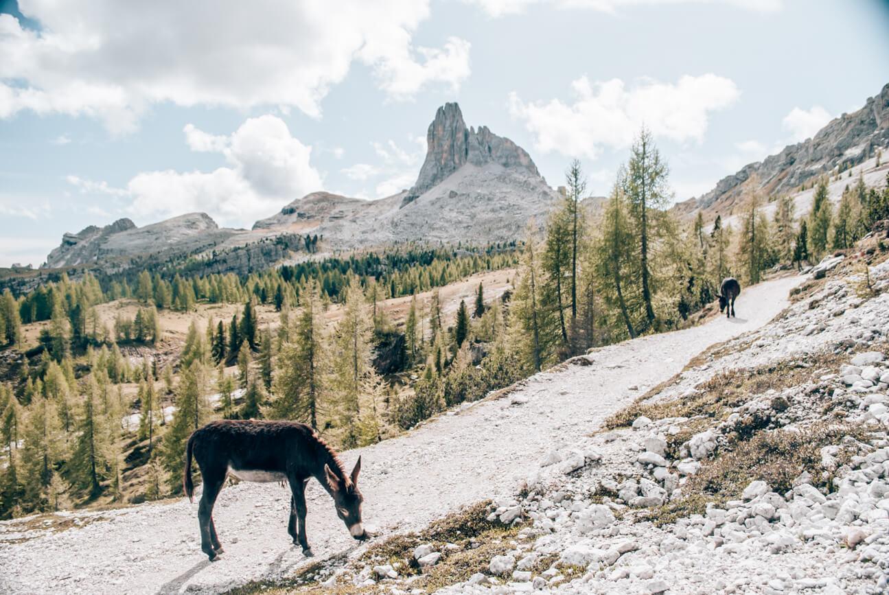 Wandern durch die malerische Landschaft der Dolomiten
