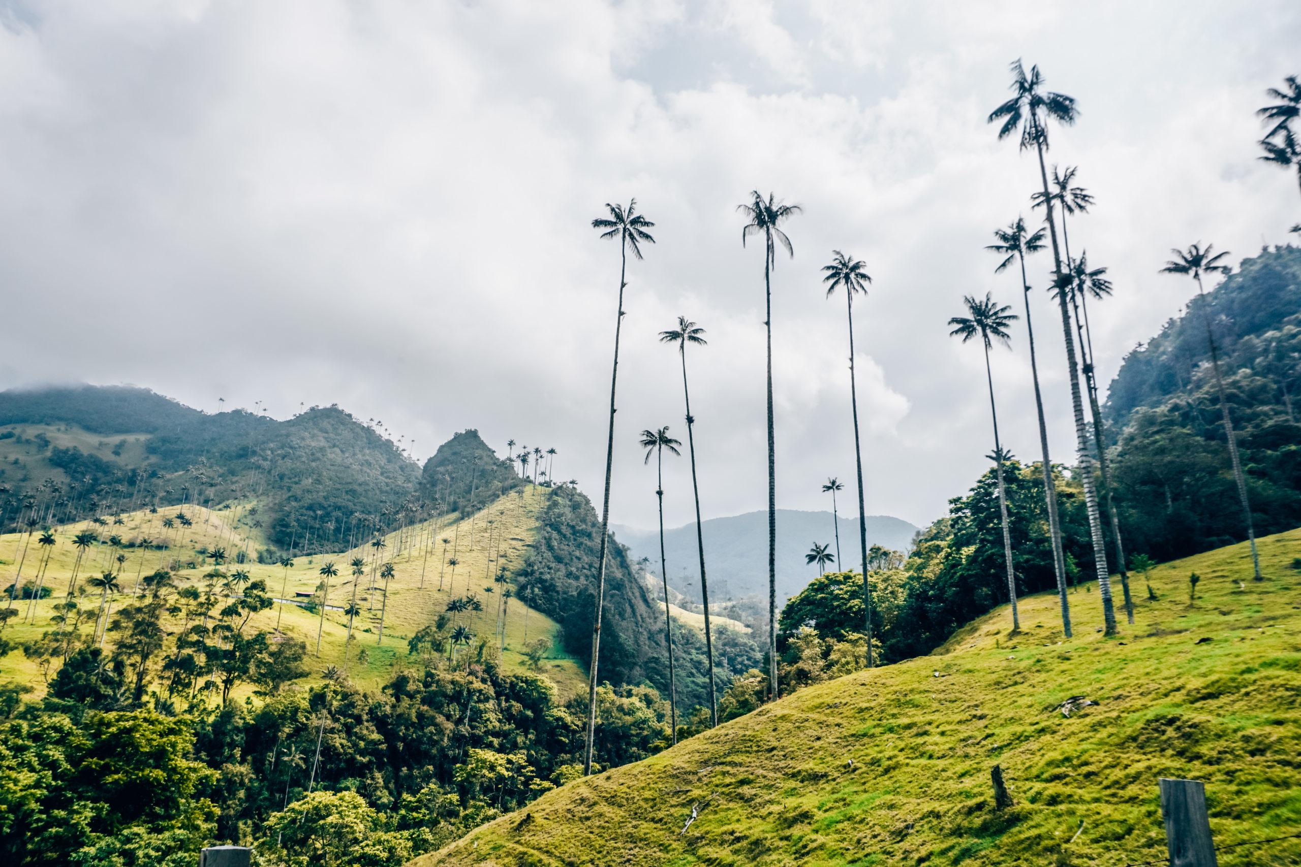 Die höchsten Palmen der Welt