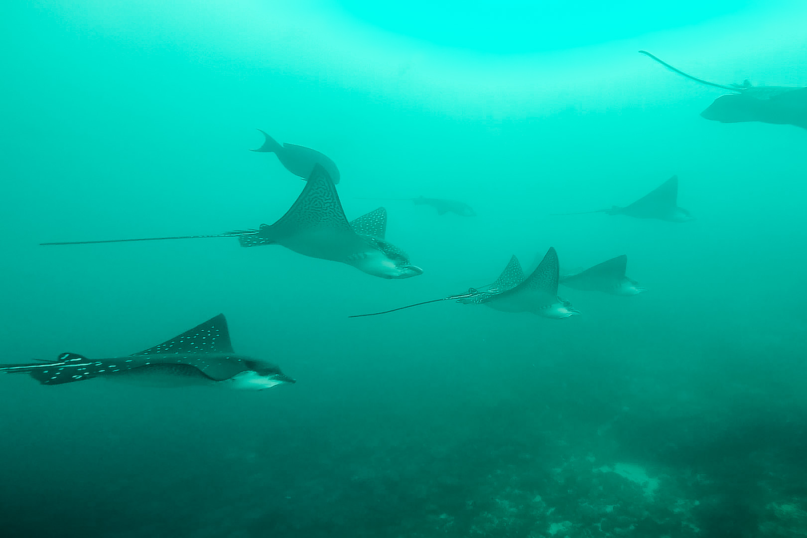 Tauchen bei Galapagos