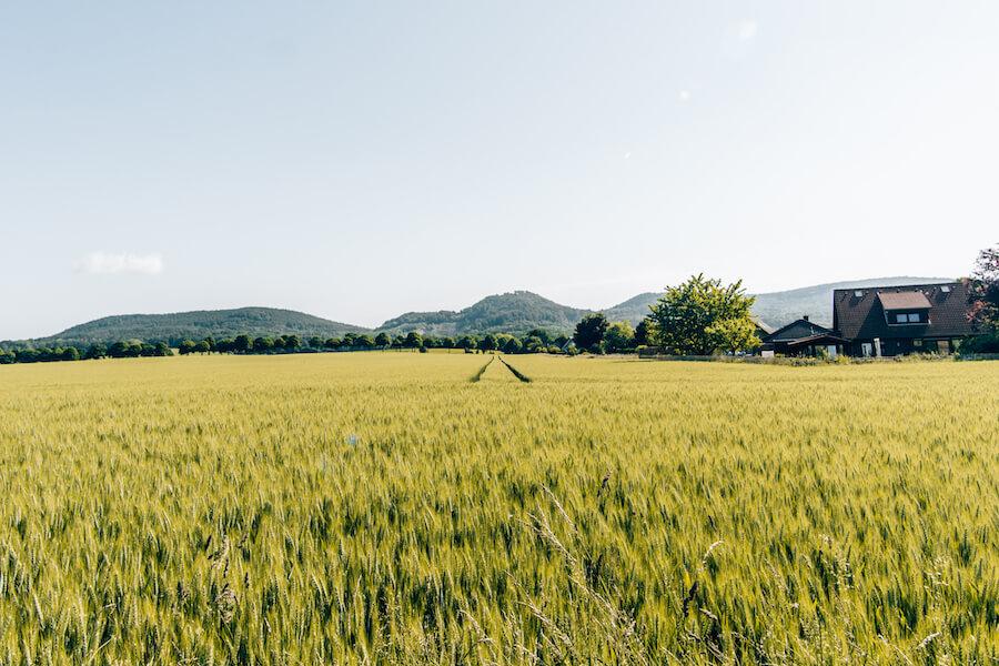 Weizenfelder bei Stadtoldendorf