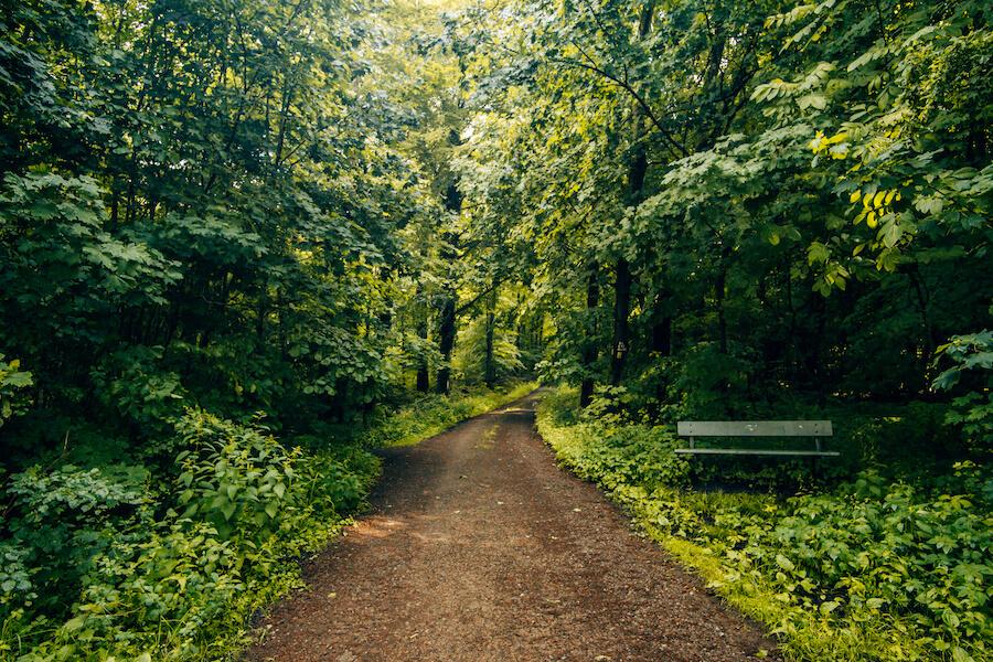 Waldwanderung auf dem Weserbergland-Weg