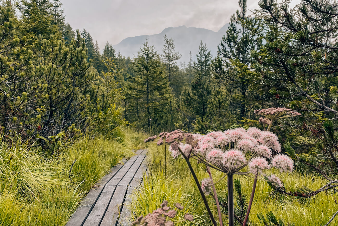 Piller Moor Wanderung
